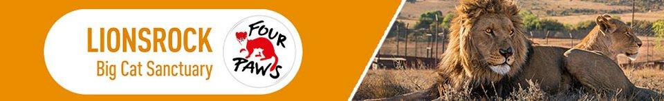 LIONSROCK Big Cat Sanctuary