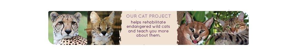 Zululand Cat Conservation