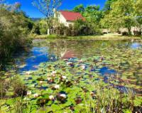 FroggyPond Cottage - Luxury
